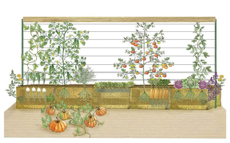 Straw Bale Garden Illustration Side View Cut away